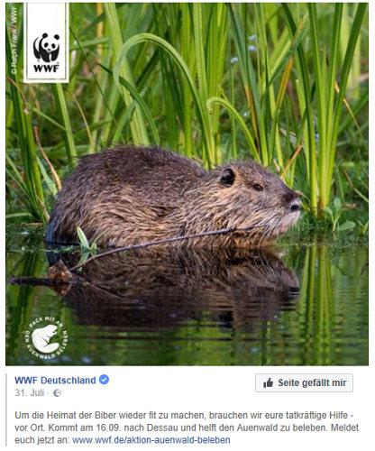 WWF2.jpg
