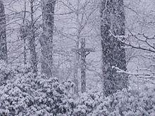 Schneechaos-Schneefall.jpg