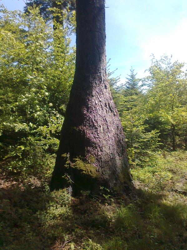 Komischer Baum_klein.jpg