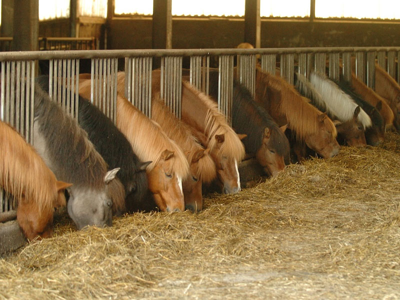 pferde-fressen.jpg
