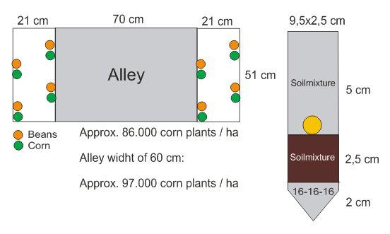 corn-layout.jpg