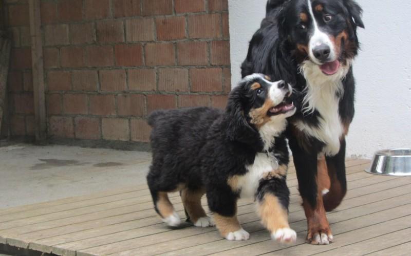 hunde walter.jpg