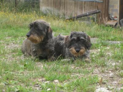 Cleo und Ati2.jpg