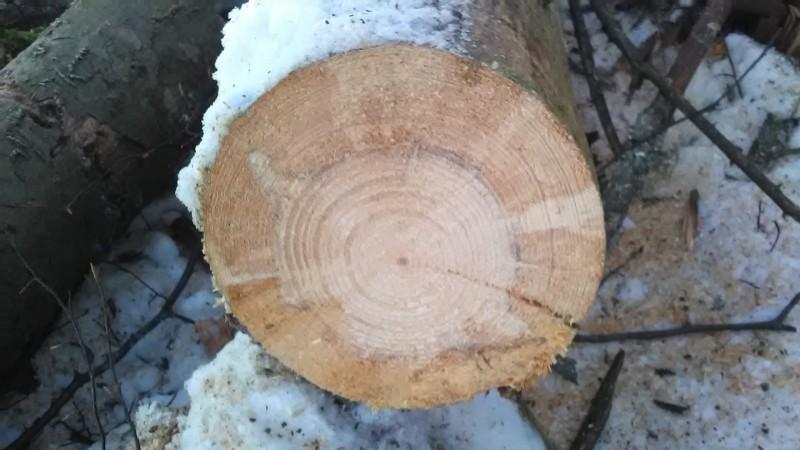 Fichtebrennholz (1).jpg